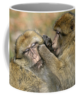 Barbary Macaques Grooming Coffee Mug