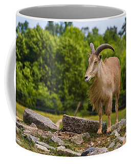 Barbary Sheep Coffee Mug