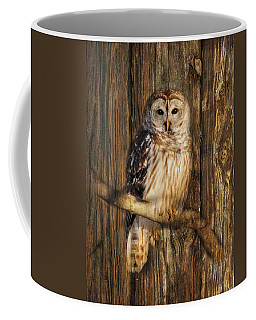 Barred Owl 1 Coffee Mug