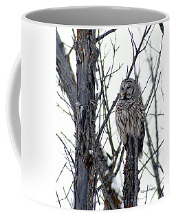 Barred Owl 2 Coffee Mug by Steven Clipperton