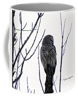 Barred Owl 3  Coffee Mug by Steven Clipperton