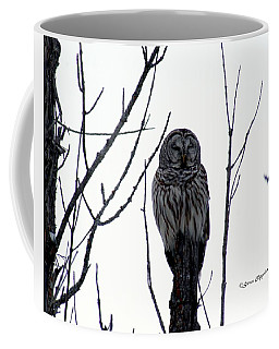 Barred Owl 4 Coffee Mug by Steven Clipperton