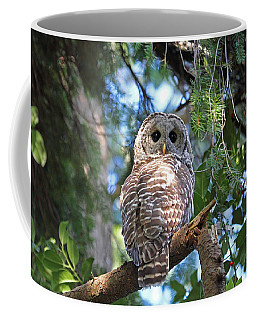 Coffee Mug featuring the photograph Barred Owl And Holly by Peggy Collins