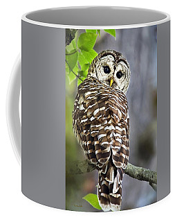 Coffee Mug featuring the photograph Barred Owl by Christina Rollo