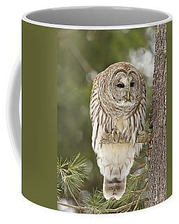 Barred Owl Hunting Coffee Mug
