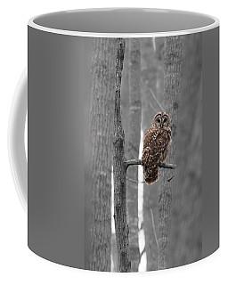 Barred Owl In Winter Woods #1 Coffee Mug by Paul Rebmann