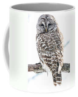 Barred Owl2 Coffee Mug by Cheryl Baxter