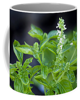 Coffee Mug featuring the photograph Basil With White Flowers Ready For Culinary Use by David Millenheft
