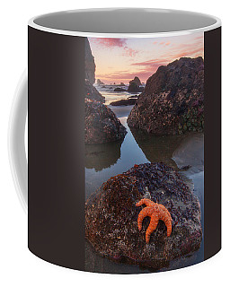 Starfish Photographs Coffee Mugs