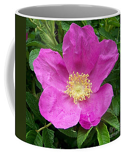 Pink Beach Rose Fully In Bloom Coffee Mug