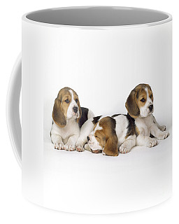 Beagle Puppies, Row Of Three, Second Coffee Mug