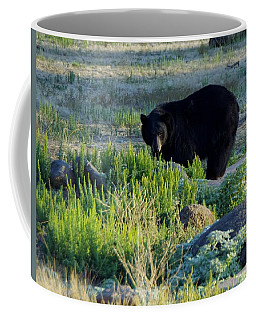 Bear 3 Coffee Mug