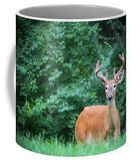 Beautiful Buck  Coffee Mug