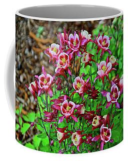 Beautiful Columbine   Coffee Mug by Ed  Riche