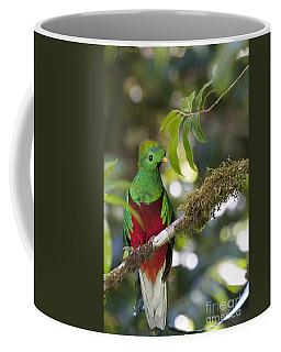Beautiful Quetzal 1 Coffee Mug