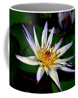 Beautiful Violet White And Yellow Water Lily Flower Coffee Mug