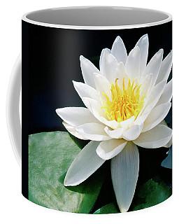 Beautiful Water Lily Capture Coffee Mug