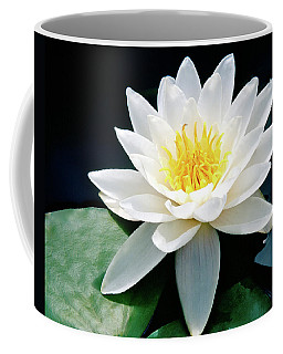 Beautiful Water Lily Capture Coffee Mug by Ed  Riche