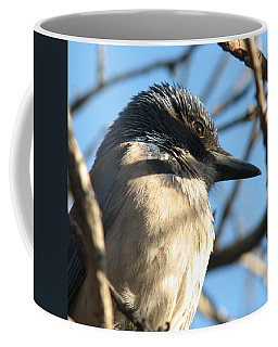 Beautiful Western Scrub Jay Coffee Mug