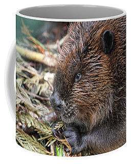 Coffee Mug featuring the photograph Beaver Eating by Peggy Collins