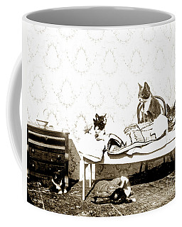 Coffee Mug featuring the photograph Bed Time For Kitty Cats Histrica Photo Circa 1900 by California Views Mr Pat Hathaway Archives