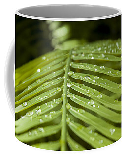 Coffee Mug featuring the photograph Bending Ferns by Carolyn Marshall