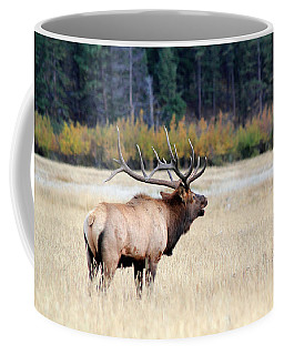 Big Colorado Bull Coffee Mug