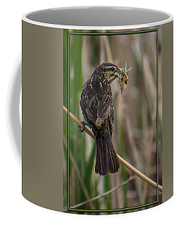Coffee Mug featuring the photograph Big Dinner For Female Red Winged Blackbird II by Patti Deters