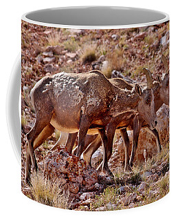 Coffee Mug featuring the photograph Bighorn Canyon Sheep Trio by Janice Rae Pariza