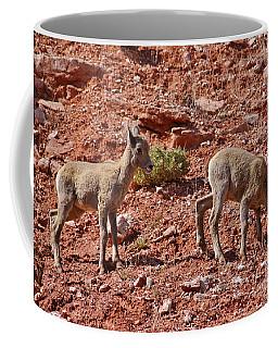 Coffee Mug featuring the photograph Bighorn Canyon Sheep Wyoming by Janice Rae Pariza