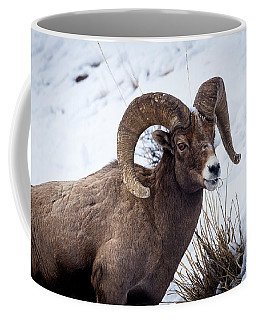 Coffee Mug featuring the photograph Bighorn Ram by Michael Chatt