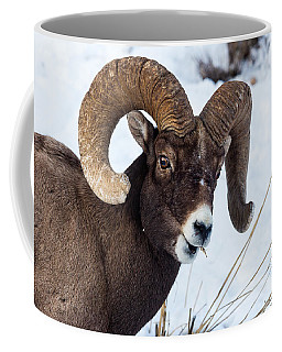 Coffee Mug featuring the photograph Bighorn Sheep by Michael Chatt