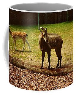 Billy Goat Keeping Lookout Coffee Mug by Amazing Photographs AKA Christian Wilson