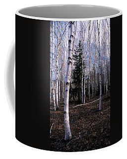 Birches Coffee Mug by Skip Willits