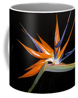 Bird Of Paradise Beauty 4 Coffee Mug