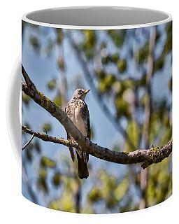 Coffee Mug featuring the photograph Bird Sitting On Brach by Leif Sohlman