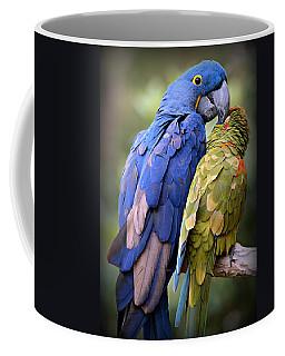 Macaw Photographs Coffee Mugs