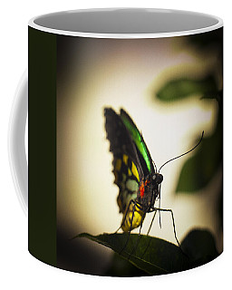 Birdwing Butterfly Coffee Mug by Bradley R Youngberg