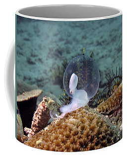 Coffee Mug featuring the photograph Birth Of Marine Cuttlefish by Sergey Lukashin