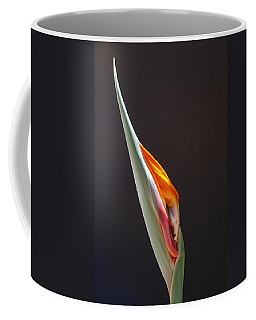 Coffee Mug featuring the photograph Birth Of Paradise by Evelyn Tambour