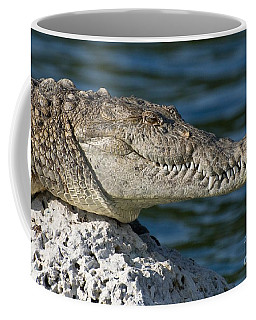 Coffee Mug featuring the photograph Biscayne National Park Florida American Crocodile by Paul Fearn