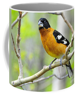 Blach-headed Grosbeak Coffee Mug