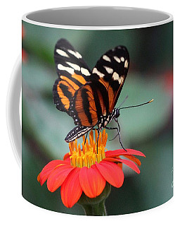 Black And Brown Butterfly On A Red Flower Coffee Mug