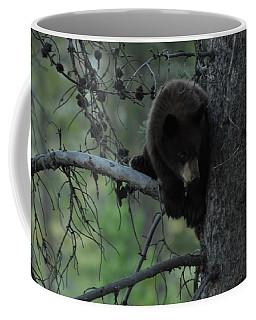 Black Bear Cub In Tree Coffee Mug