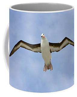 Black-browed Albatross Flying Coffee Mug