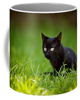 Black Kitten Coffee Mug