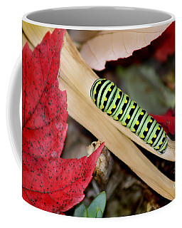 Black Swallowtail Butterfly Caterpillar Coffee Mug