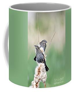 Blackbird Pair Coffee Mug