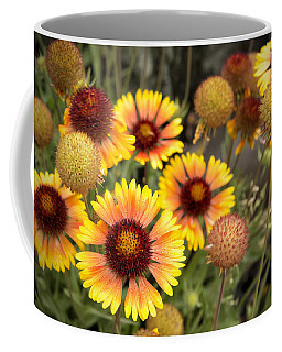Coffee Mug featuring the photograph Blanket Flowers  by Belinda Greb