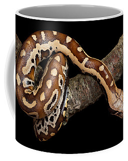 Blood Python Python Brongersmai Coffee Mug